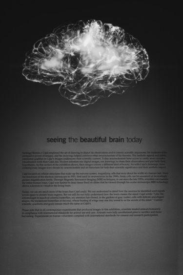 心理学を学ぼうを読んだ感想