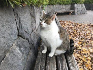 近所の公園に住む猫の観察日記#1