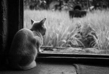 猫イジメに断固NO!虐待動画の犯人を追えを観た感想
