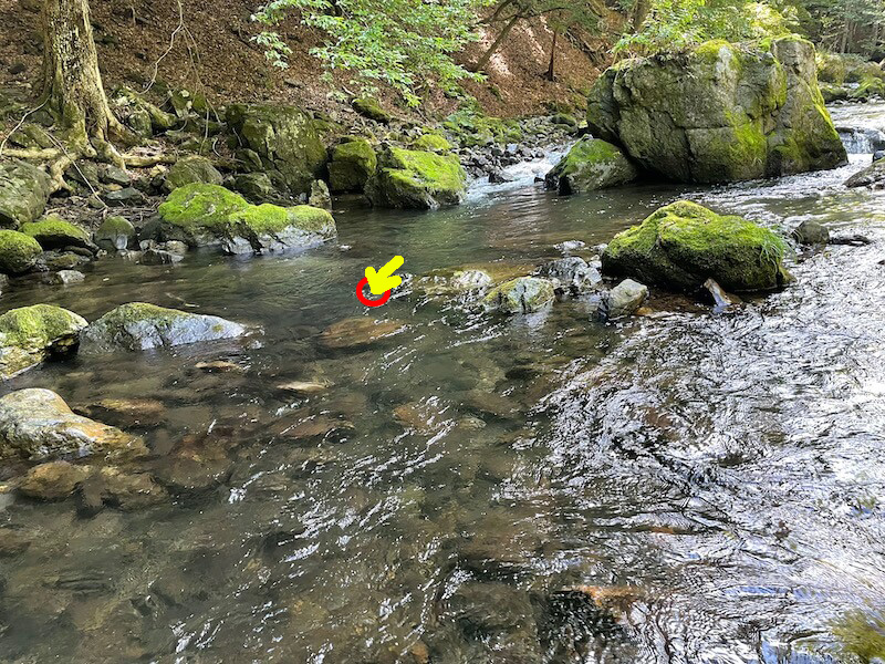 本谷 神流川 釣り