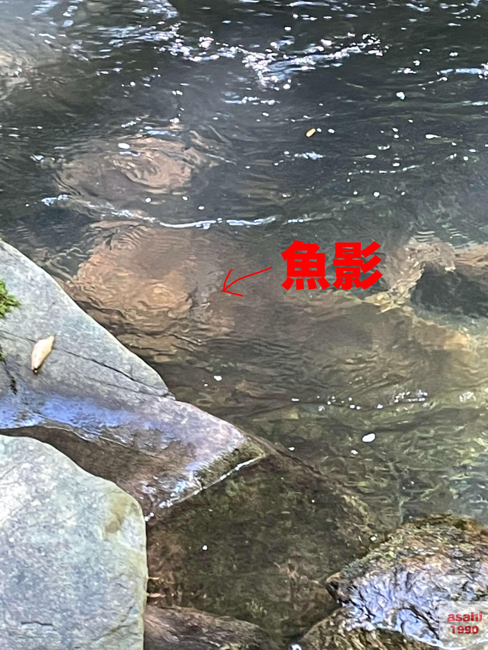 本谷 神流川 釣り 魚 ヤマメ