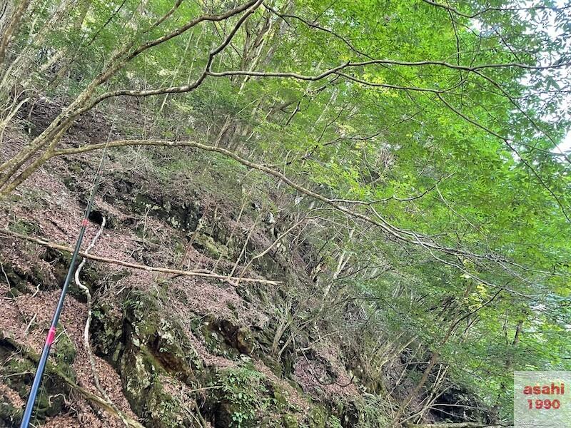 本谷 神流川 釣り 木