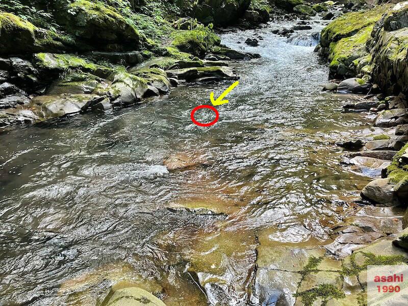 本谷 神流川 釣りテンカラ