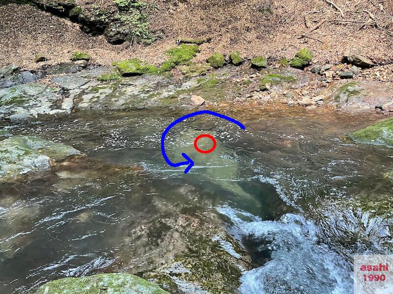 本谷 神流川 釣り流れ